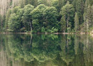 Rakouská cyklostezka vás od Lipna dovede až k Plešnému jezeru pod Plechý.