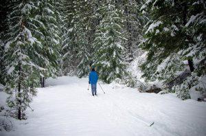 Kolem Hůrky a Horní Plané si projedete 4 upravované běžkařské trasy.
