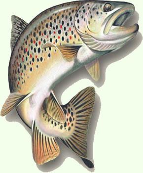 Rybí restaurace Hůrka - speciality z čerstvých ryb ve stylovém prostředí.