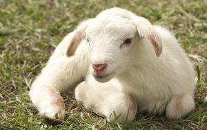 Ubytování vedle farmy, kde si děti pohladí a nakrmí domácí zvířectvo.