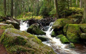 Výlety do přírody si oblíbíte - všude kolem je jí tolik a tolik...