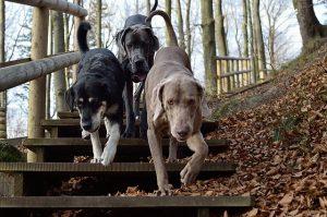 Dovolená se psem má taky nějaká pravidla. Dodržujte je prosím, ať si dovolenou na Lipně užije i okolí.