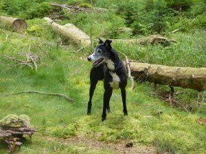 Ubytování se psem na Lipně je zábava, když psi mají výběh. U nás velkorysou oplocenou zahradu.