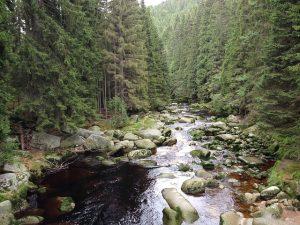 Lipensko vás uchvátí překrásnou přírodou Národního parku a CHKO Šumava.