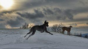 """Otázkou """"kam na výlet na Šumavě se psem"""" si nemusíte klást. Všude kolem je nespočet možností."""