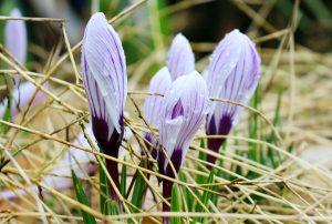 Velikonoce jsou poslem jara a Lipensko se probouzí do krásy.